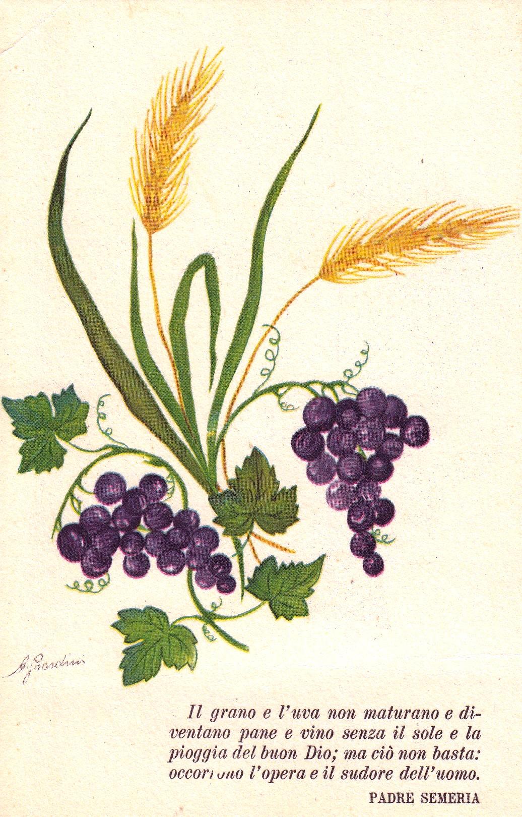 cartolina con il grano e l'uva